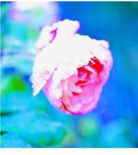 Rosa-Marcello-Fara-sussurri di luce